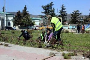 Столицу Южной Осетии летом украсят 30 тысяч петуний